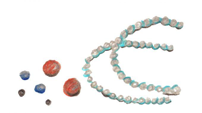 学びとつながる 近江特産品トリビア 《暮らし編》5 淡水真珠